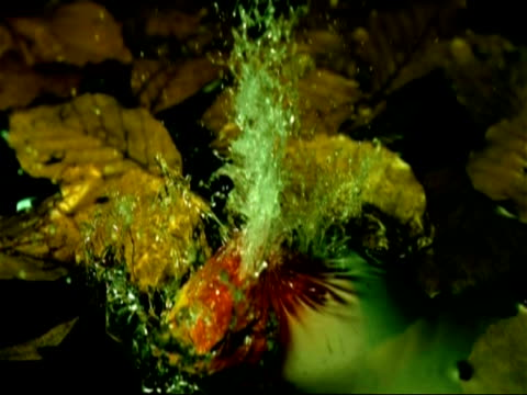 High speed apple dropping into water, slow motion