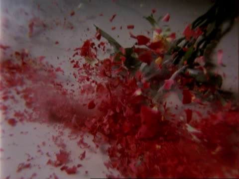 CU High Speed bunch of red roses frozen in nitrogen smash onto surface