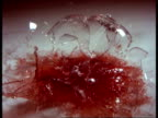 High Speed - CU Glass of red wine smashing on white marble surface