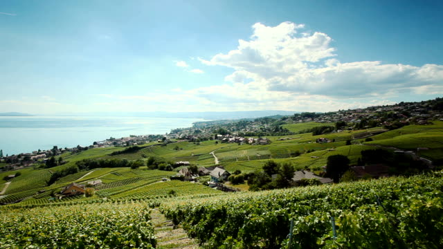 high speed train and vinyard Lavaux