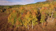 High to Low ORBIT Aspen Trees, Aerial, 4K, 25s, 22of34, Aspen Trees, Foliage, Mountains, Beautiful Colors, Changing leaves, Colorado, Aerial, Stock Video Sale - Drone Discoveries 4K Nature/Wildlife/Weather Drone aerial video