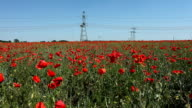 High-voltage lines and poppies