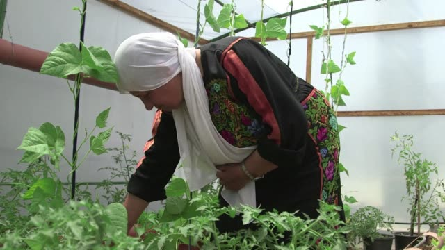 Hijar Hamdan al Ayess picks off a few yellowing leaves before pouring water into a hollowedout pipe filled with soil where she has planted rows of...