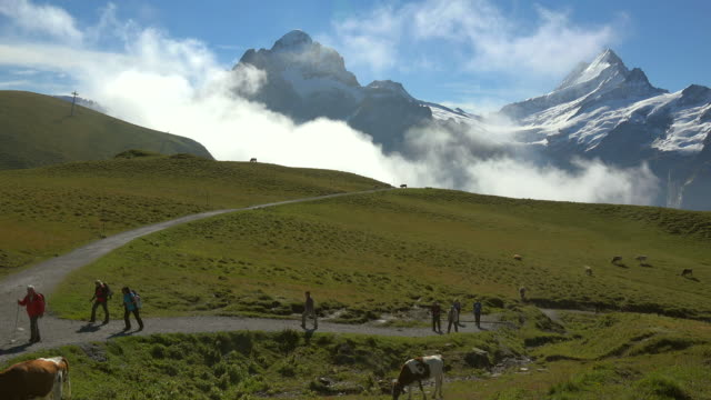 Hiker at Grindelwald-First with Schreckhorn and Wetterhorn, Bernese Alps, Switzerland, Europe
