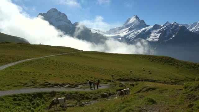 Hiker at Grindelwald-First with Schreckhorn and Wetterhorn, Bernese Alps, Switzerland, Europe