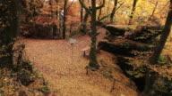 WS Hiker walking through autumn forest  / Kastel-Staadt, Rhineland-Palatinate, Germany