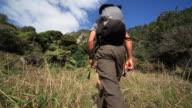 Hikers walking through wilderness