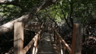 Hiking footpath in mangrove forest, Philippines