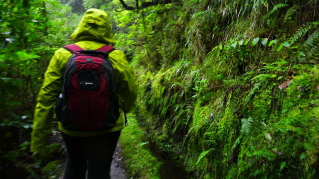 Hiking in a laurel forest of Madeira island