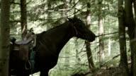 Wandern mit Pferd. Bergige Landschaft