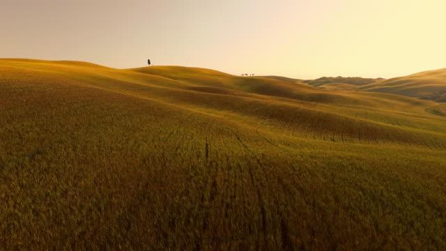 AERIAL hügelige Landschaft in der Toskana