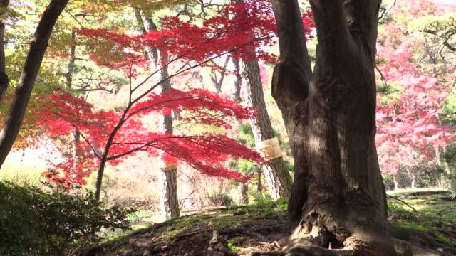 Historic Japanese garden