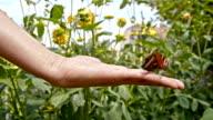 SLO MO Hodling ein Schmetterling auf der Seite