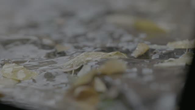 Hojas bajo la lluvia en calle empedrada