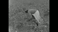 1934 Home Movie - picking cotton
