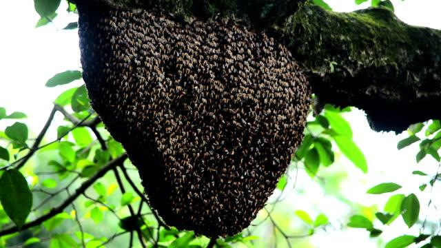 Honig Biene Schwarm im Baum
