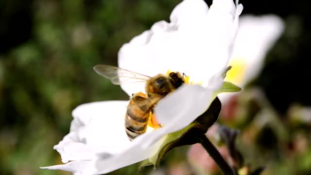 SERIES: Honey bee