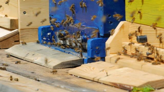 PAN Honig-Bienen, die im Bienenkorb Medium Schuss (UHD
