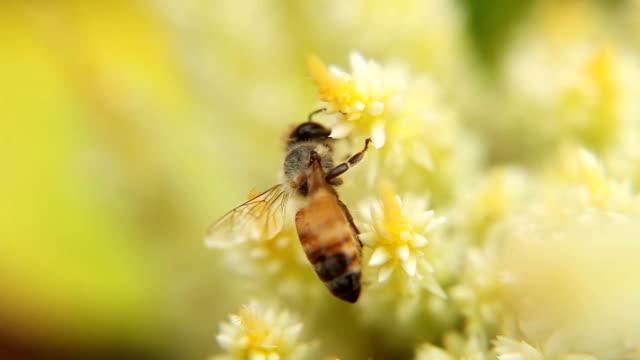 honey natrue