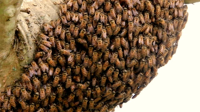 Honeycomb on the tree