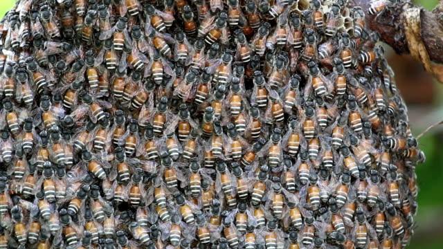 Bienenwabe.