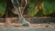 SLO MO DS zoccoli dei cavalli trotting
