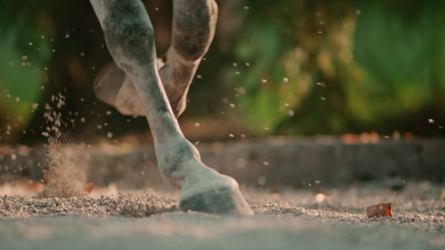 SLO MO DS Hooves of a trotting horse