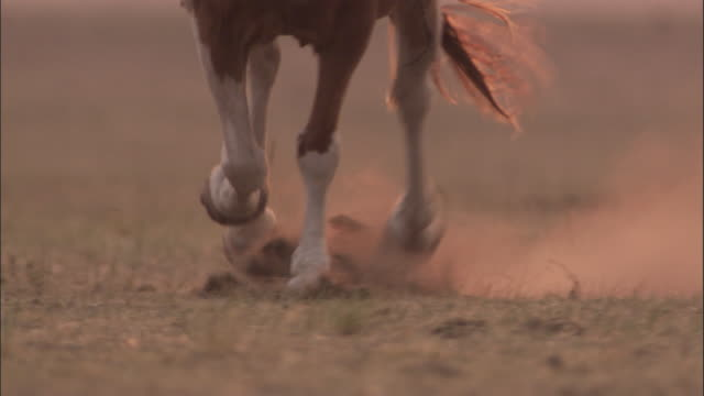 Hooves of horse galloping on dusty steppe, Mongolian steppe