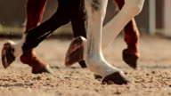 SLO MO TS Hooves of three horses walking in arena