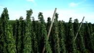 Hop Yard Luftaufnahme der Überführung von