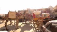 Horse and camel carriage in Giza, Cairo, Egypt
