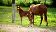 Horse and foal at green field.