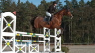 SPEED RAMP Horse with rider jumping oxer in sunshine