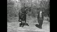 A horse crosses its legs like Buster Keaton