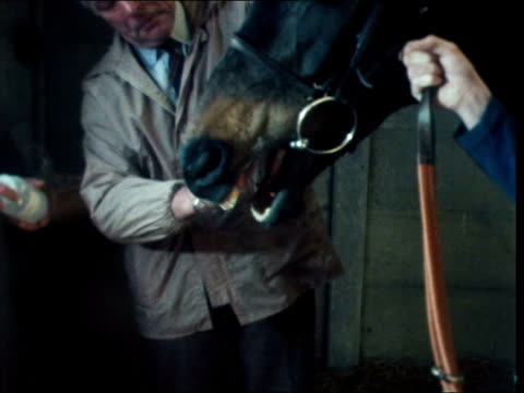 Horse doping ENGLAND Sufflk Newmarket EXT Various shots horses led around Plumpton Course by trainers INT Various shots swab tests being taken of...