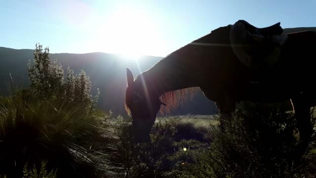 caballo comer hierba en la montaña en alguna Mojanda Ecuador