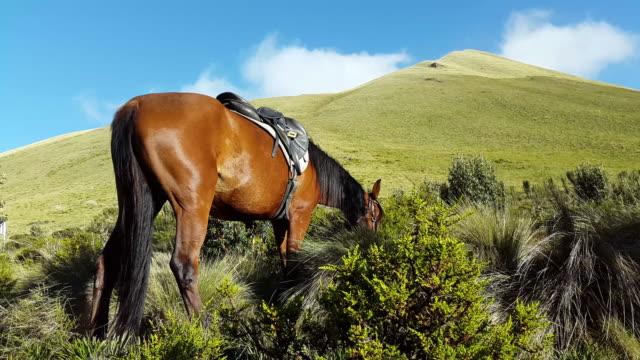 caballo comer hierba en la montaña con luz del sol en la laguna Mojanda Ecuador