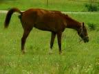Horse Eats and Defecates