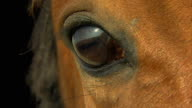 horse eye in macro close up