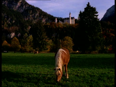 A horse grazes in the pasture near the  Neuschwanstein Castle in Bavaria, Germany.