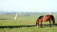 Horse grazing grass at meadow with wind tubines background,real time.