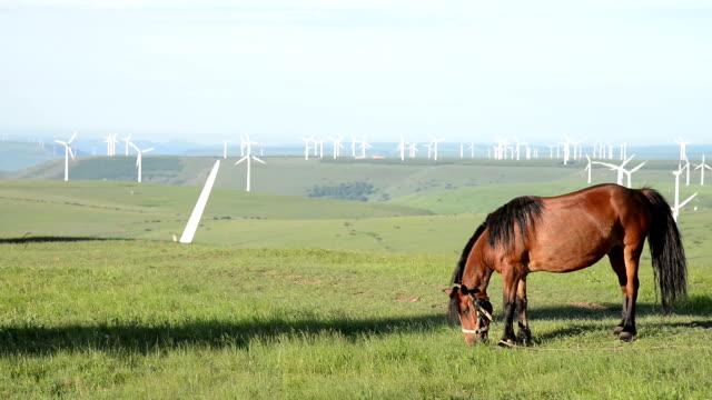 Pferd beim Grasen auf Wiese mit Gras wind tubines Hintergrund, Echtzeit.