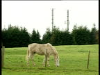 Horse grazing in field telephone masts in background