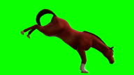 Horse Green Screen (Loopable)