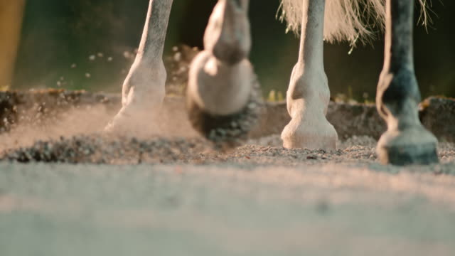 SLO MO Horse hooves kicking sand at sunrise