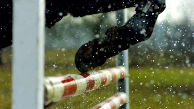 Pferd in Bewegung, über Hindernisse einem Reittier fortbewegen können.