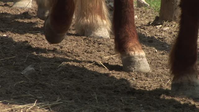 HD: Horse hooves