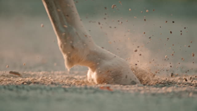 SLO MO Horse hooves walking on sandy ground