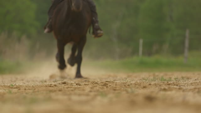 Horse, horseback rider galloping full speed with great sound
