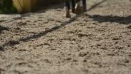 Cavallo nel campo 2